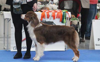 PARIS DOG SHOW : résultats de Kasey & Queenie