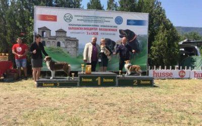 Queenie devient Championne et Grande Championne de Bulgarie