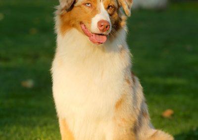 kasey-chien-bergers-australiens-exposition-metz-tour-brune2