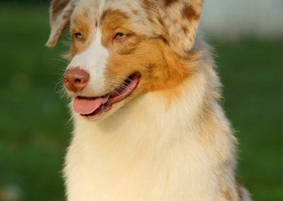 kasey-chien-bergers-australiens-exposition-metz-tour-brune3