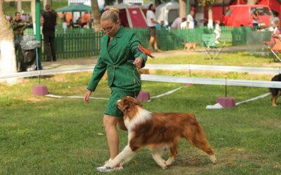 Dracula Dog Show 2020 – Roumanie