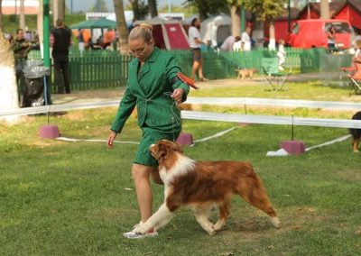 logan-exposition-chiens-tour-brune-elevage