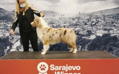 Sarajevo Dog Show 2020 – Bosnie